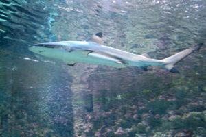 Haitunnel Bergen Aquarium