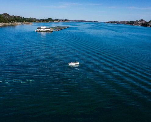 Ganz allein im Fjord.