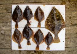 Ralfs Plattfische